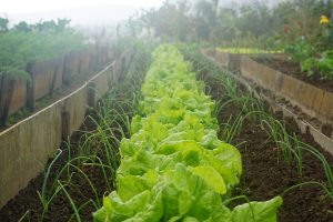 Horticulture Industry gets a Labour Agreement